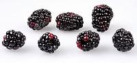 Blackberries - Non Exclusive