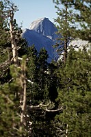 Forest in front of the Half Dome rock formation, Yosemite National Park, California, USA
