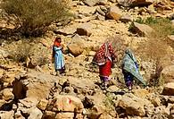 Omanische Frauen in farbenfroher Kleidung auf einem Felsenpfad auf dem Weg zu ihrem Bergdorf im Hadschar_Gebirge, Sultanat Oman / Omani women in color...