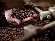 Hand holding coffee beans over roasting machine