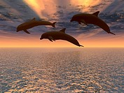 dolphin red sunset