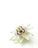 Passiflora caerulea, Passion flower