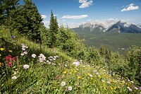 Wildflowers On Hill Side With Mountains And Valley In The Distance With Blue Sky And Clouds, Alberta Canada