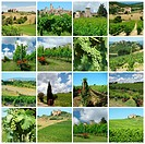 collage with green vineyards in tuscan countryside, Italy,Europe