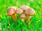 group of fresh natural edible mushrooms in autumn time