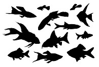 Vector fish silhouettes isolated
