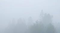 Thick mist.