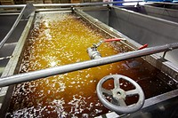 Washing tanks, Production line of canned vegetables and beans, Canning Industry, Agri-food, Logistics Center, Gutarra-Riberebro Group, Villafranca, Na...
