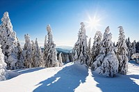 Germany, Bavaria, View of snow covered trees at Bavarian Forest