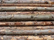 stacked log cut trees