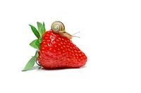 Snail on Strawberry / slug damage