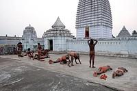 Joranda monks performing obeisance in prayer at temple containing a dhuni, an eternal butter lamp, at dusk, Joranda, Orissa, India, Asia