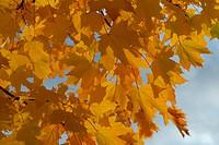 Scandinavian Lifestyle_yellow leaves
