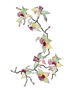 orchid branch isolated