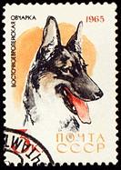 Alsatian dog on post stamp