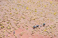 Several people on a trekking tour with pack horses on a hill covered with cushion plants, High Atlas mountain range, Morocco, Africa
