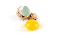 broken egg quail