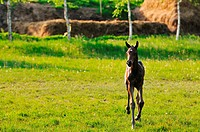 beautiful animal horse outdoor run and have fun