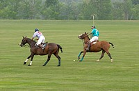 Polo match in Western New York