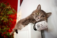 Lazy cat lying on a heater