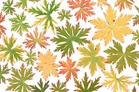 Colour autumn sheet background