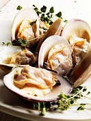 Steamed Middle Neck Clams with Sprigs of Fresh Oregano