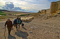 Flock sheep and Shepherd with a donkey and dogs, near castle wall Urueña, Castile and León, Spain