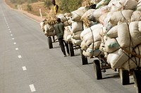 Between Torodi and Niamey, Niger: July 11, 2007. Young men from the village lead donkeys pulling carts of cooking ingredients, like baobab leaves, okr...
