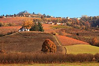 View on hills and vineyards at fall in Piedmont, Northern Italy.