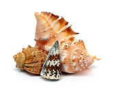 group of sea shells close_up on white