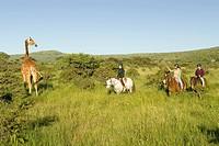 Female horseback riders ride horses in morning near Masai Giraffe at the Lewa Wildlife Conservancy in North Kenya, Africa