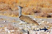 Namibian wild life