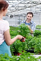 Germany, Bavaria, Munich, Mature man and woman in greenhouse between parsley plants