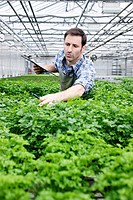 Germany, Bavaria, Munich, Mature man examining parsley plants in greenhouse