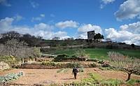 Azuelo vegetable gardens and chapel, Navarra, Spain, Europe
