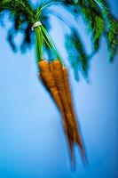Close_up of a carrots
