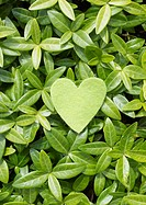 Leaves and heart_shaped felt