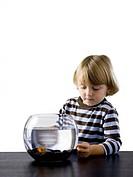 USA, Utah, Provo, Boy 2_3 watching goldfish in bowl