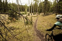 A female mountain biker riding singletrack in Canmore, AB
