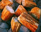 Petrified Logs in Petrified Forest National Park, Arizona