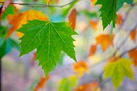 autumn fall tree leaves background outdoor