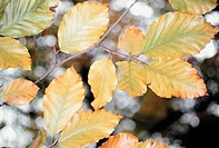 Detail view of leaves against blurry background