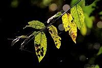 Plant in the nature, borneo