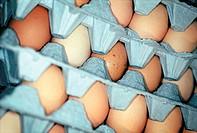 Eggs in Crates