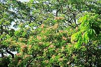 Tree , India