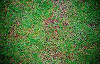 Grass Floor pattern background