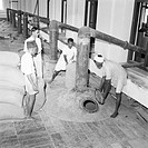 Year 1953 ; workers working in sandal oil extracting factory ; Mysore city ; Karnataka ; India