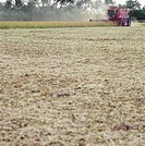 Crops being harvested