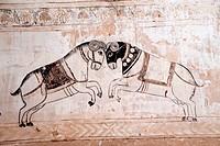 Wall paintings mural of horses fighting at Lakshminarayan temple , Orchha , Tikamgarh , Madhya Pradesh , India