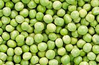 Full of fresh green peas